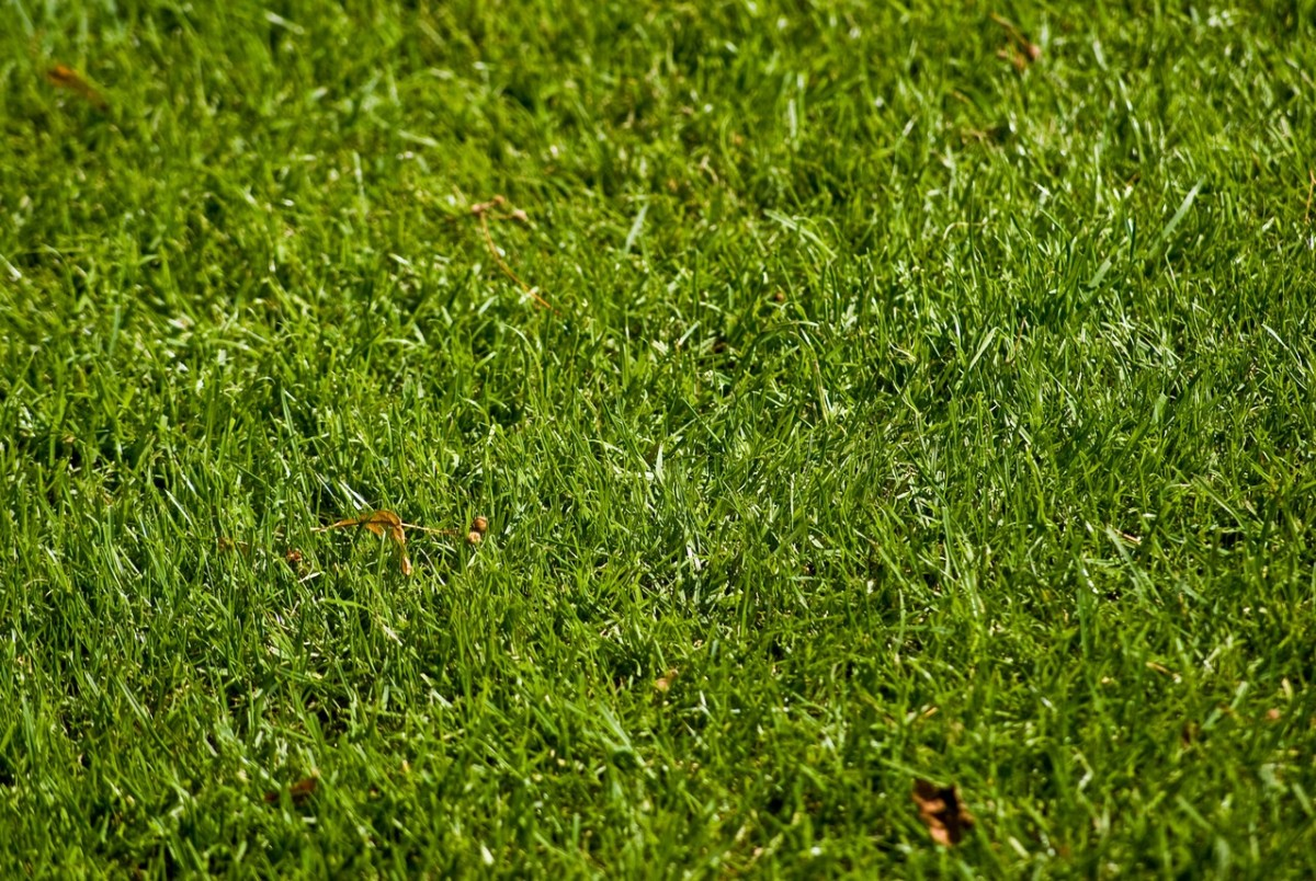 Kiedy nawozić trawnik?